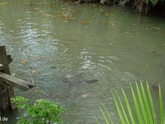 Welsfarm in Krabi, Fishing Park